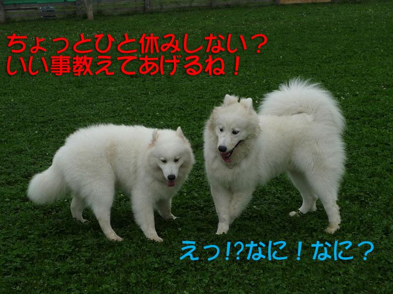 b0146024_17351750.jpg