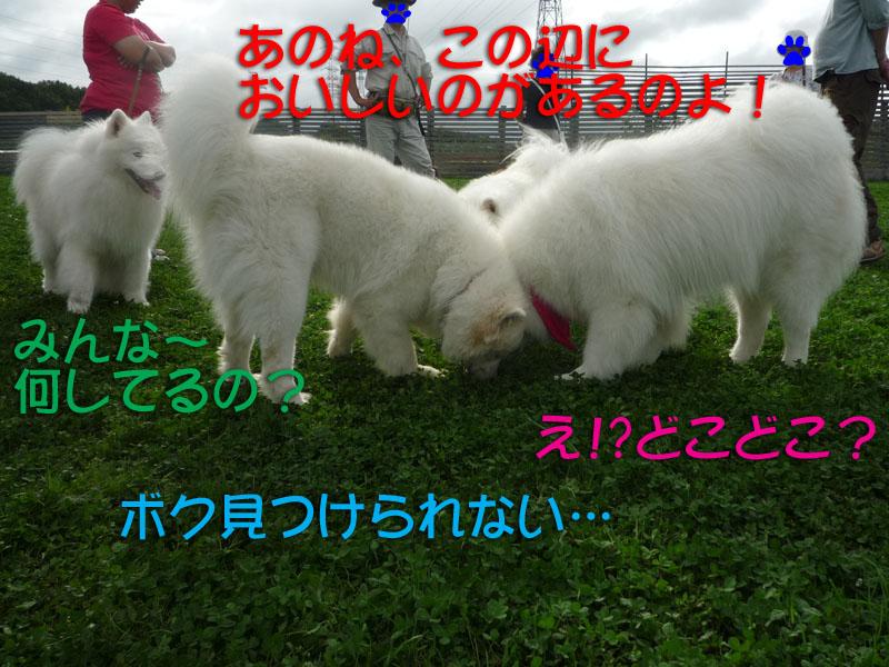 b0146024_17353660.jpg
