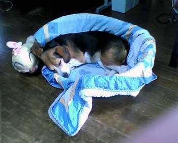 犬と人間の共存社会(2)_b0005652_21573442.jpg