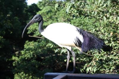 シャボテン公園 ①鳥園 <伊豆高原>_c0118352_2173425.jpg