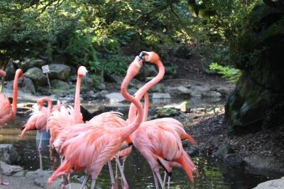 シャボテン公園 ①鳥園 <伊豆高原>_c0118352_218346.jpg