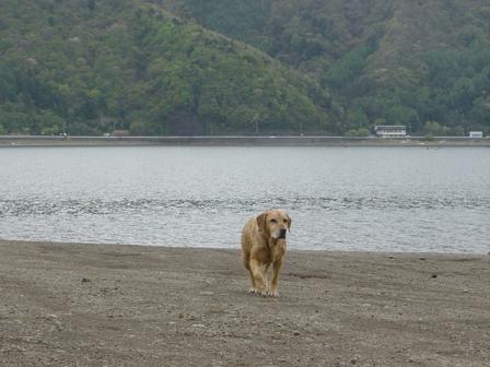 西湖でハナちゃんの初泳ぎ成るか!(その2)_f0064906_20243887.jpg
