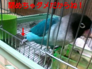 f0126418_1453519.jpg