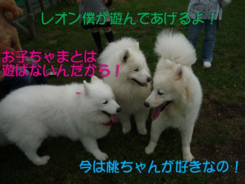 b0146024_14535198.jpg