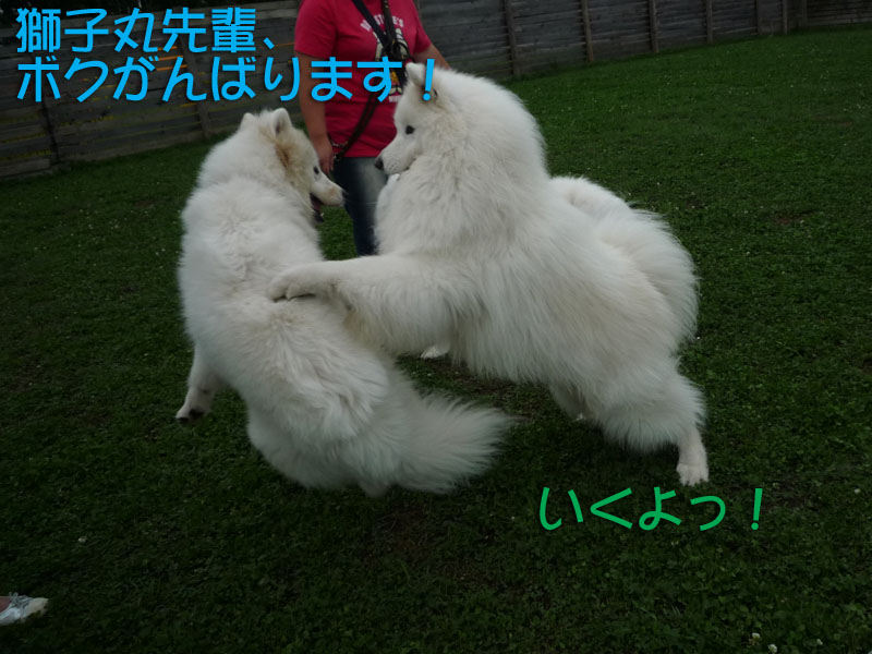b0146024_14553823.jpg