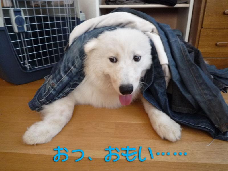 b0146024_1843037.jpg