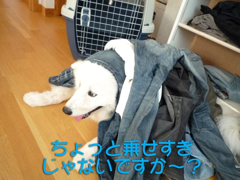b0146024_1844888.jpg