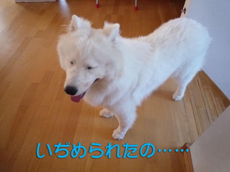 b0146024_186585.jpg