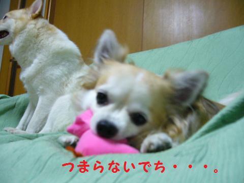 b0138430_2083526.jpg