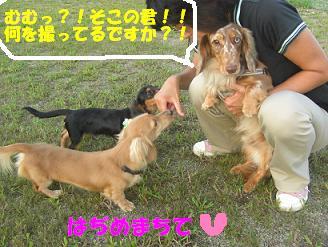 ダックスDAY?!_f0170713_1635384.jpg