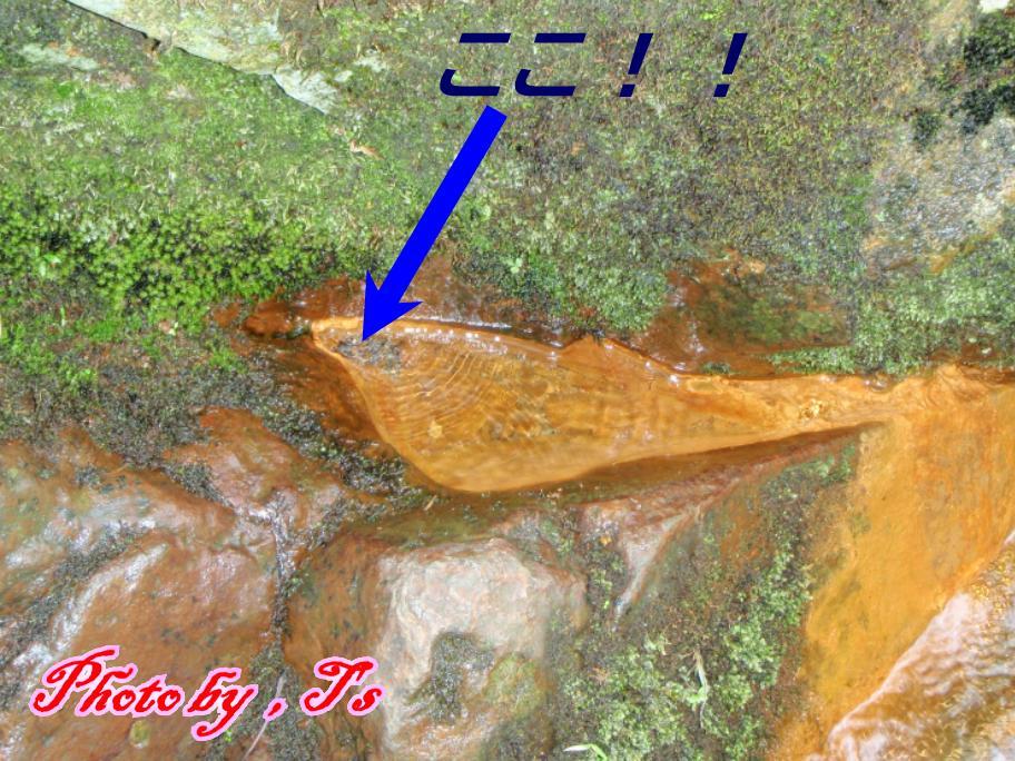 f0147821_16475936.jpg