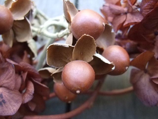 オークリーフ(茶色の紫陽花とウッドローズのリース)_f0049672_16504973.jpg