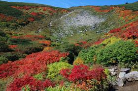 大雪山の紅葉_f0138096_11165153.jpg