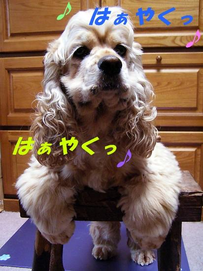 b0067012_237556.jpg