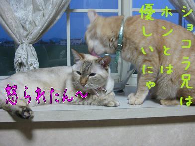 b0151748_12302638.jpg