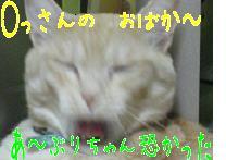 b0151748_12404364.jpg