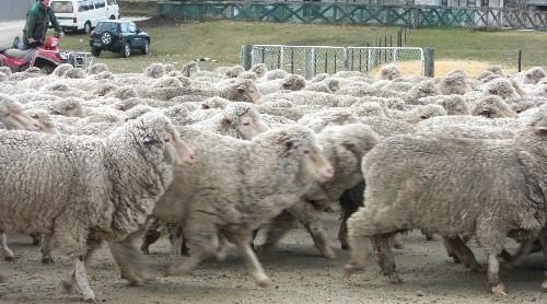 羊に囲まれた!!!_c0151965_21325084.jpg