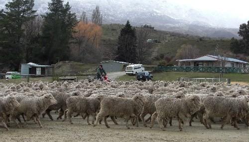 羊に囲まれた!!!_c0151965_2132696.jpg