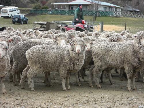 羊に囲まれた!!!_c0151965_2135519.jpg