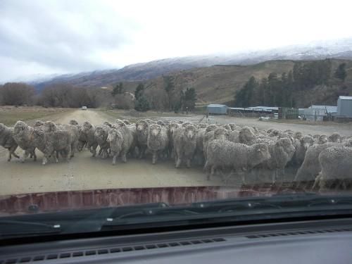 羊に囲まれた!!!_c0151965_21383599.jpg