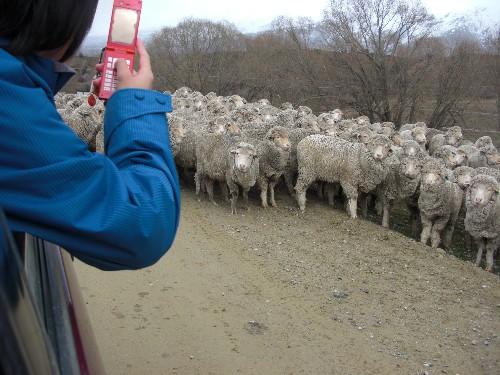 羊に囲まれた!!!_c0151965_21401615.jpg