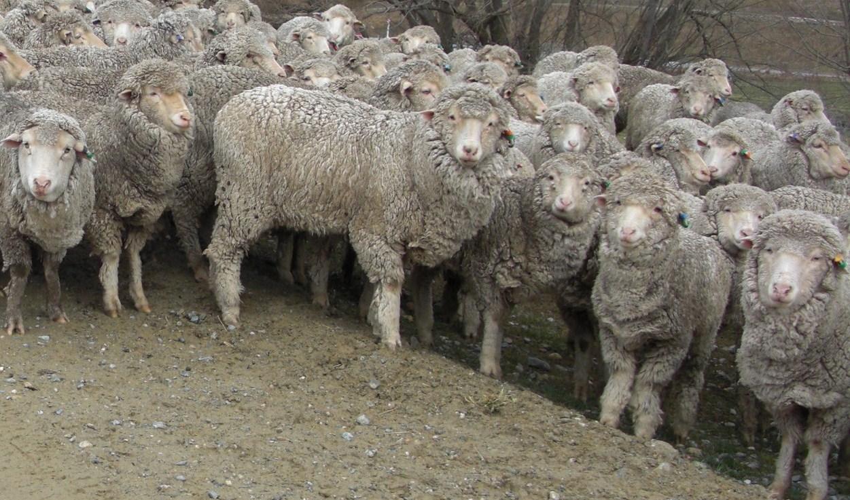 羊に囲まれた!!!_c0151965_21415111.jpg