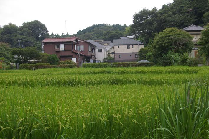 9月5日、北鎌倉テニスコート築造問題で住民集会_c0014967_9523194.jpg