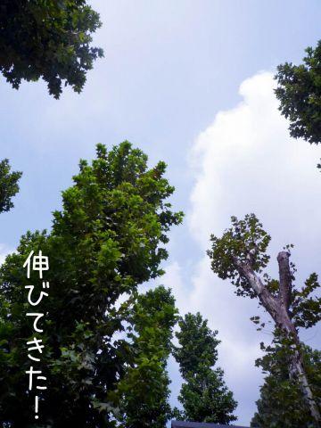 c0062832_1715963.jpg