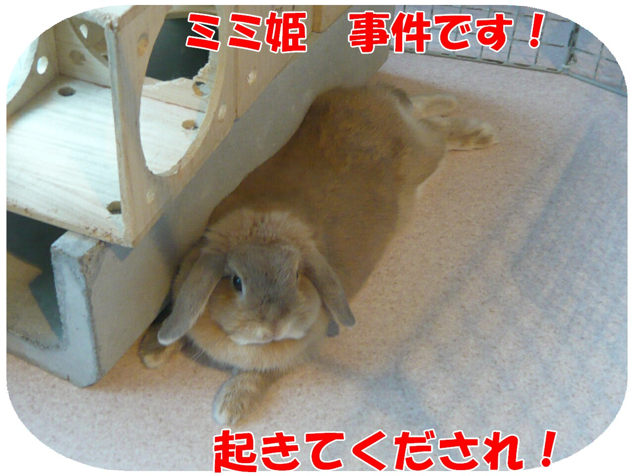 c0151439_16493757.jpg