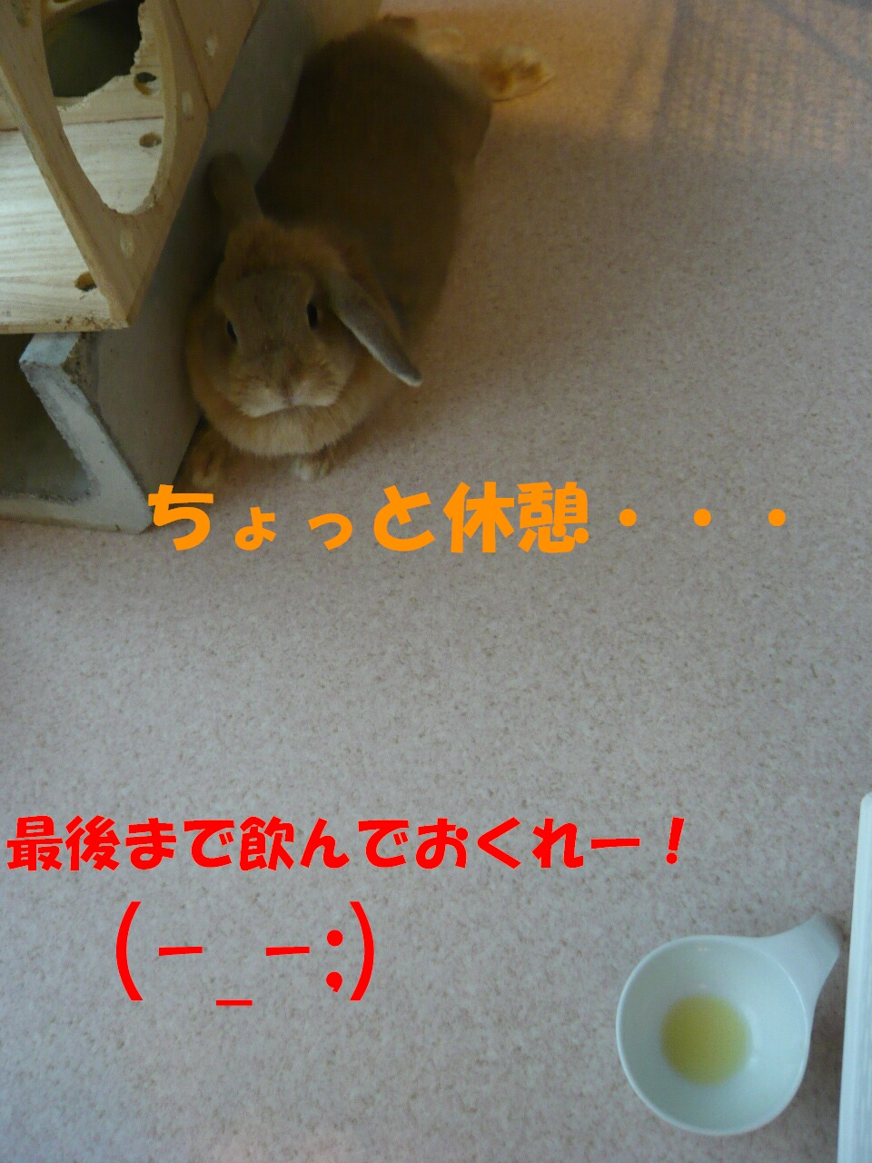 c0151439_16535188.jpg