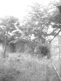 f0100480_19263727.jpg