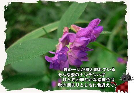 f0137096_21234218.jpg