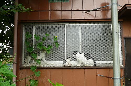 路上採取  飾り窓の猫_b0014003_14295363.jpg