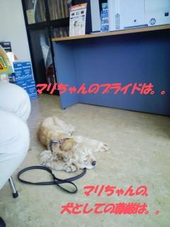b0067012_142261.jpg