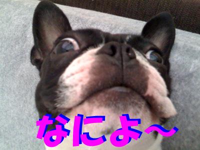 f0166359_20111070.jpg