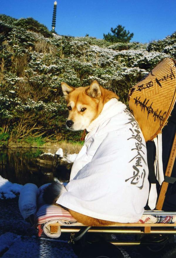第9話 雪の足摺へんろ旅 2001~2002冬_c0049299_1022860.jpg