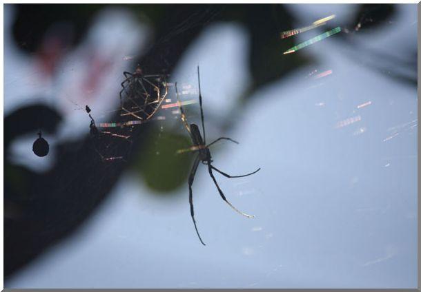 蜘蛛のおもいで_d0123528_14131811.jpg