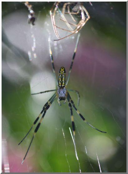 蜘蛛のおもいで_d0123528_14221541.jpg