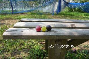再び、ぶどう狩り_e0036730_2221078.jpg