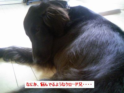 b0148945_231571.jpg