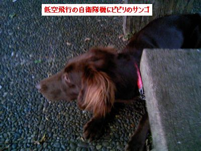 b0148945_2365534.jpg