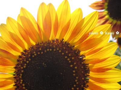 f0179575_18331997.jpg