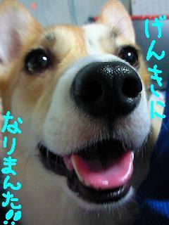 c0134720_8391016.jpg