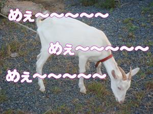 b0127926_712592.jpg