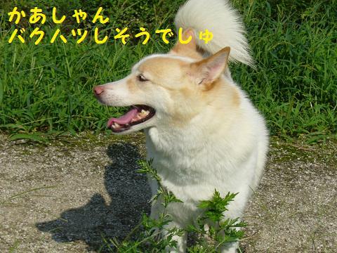 b0138430_2044015.jpg