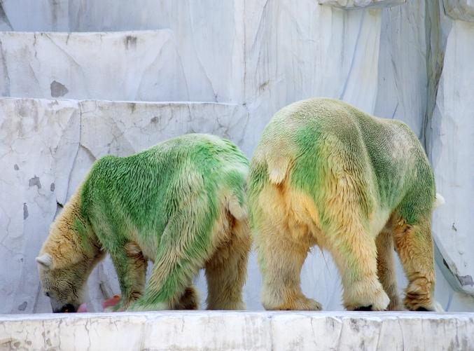 「ミドリグマ」だけど白クマです!! ~ナイトzooもあるよ!~_d0145934_20141850.jpg