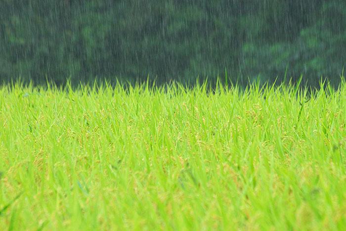 秋雨_c0067040_2242874.jpg