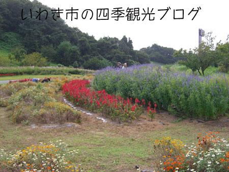 f0105342_1755327.jpg