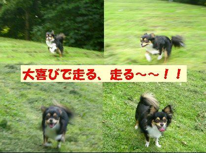 d0089861_175064.jpg
