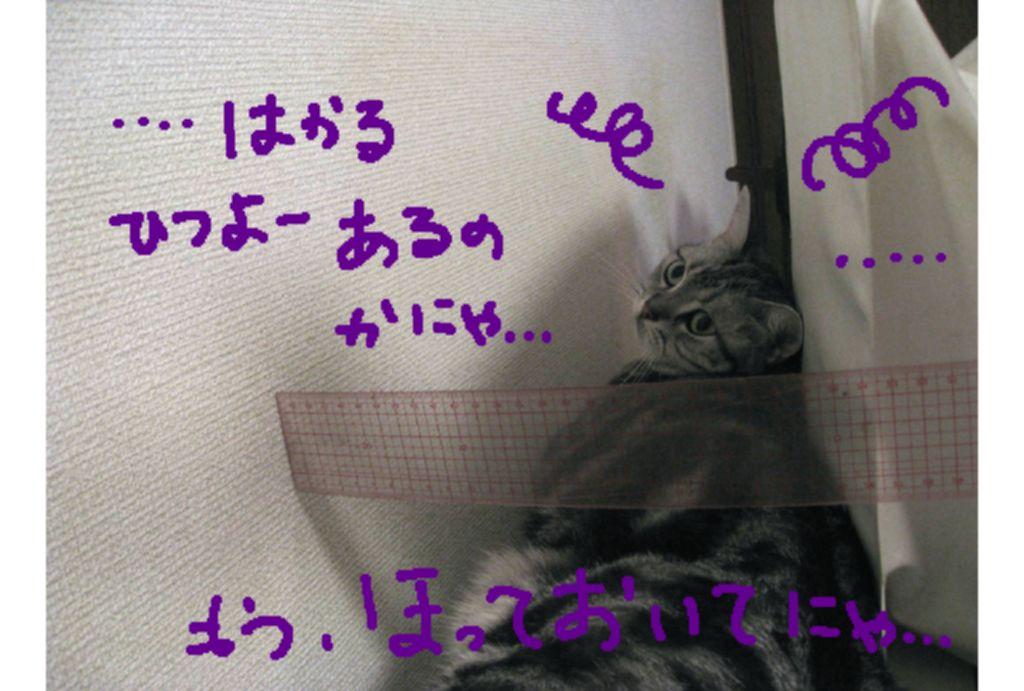 d0132661_19494288.jpg